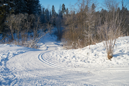 Sunny landscape scenery with cross country skiing way in snowy winter forest in Southern Finland.