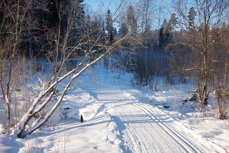 Sunny landscape scenery with cross country skiing way in snowy winter forest