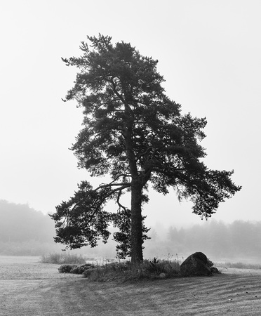 Bare lonely tree on foggy backyard in black and white. Lodja, Estonia. An unique minimalistic fine art image. Serenity and tranquility in concept. Stock Photo