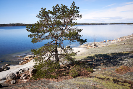 Lonely tree in peaceful summer landscape by the Baltic Sea in Kasnäs, Kemiö, Finland. Wide angle shot of the coastline at Finnish archipelago. Stok Fotoğraf