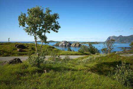 A tree at the famous tourist attraction Hamn Village, Senja island, Troms county - Norway