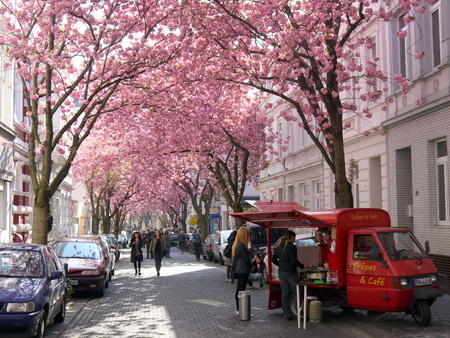 BONN, GERMANY - APRIL 18, 2016: Little mobile coffee shop under rows of cherry blossoms sakura trees in Bonn, former capital of Germany on a beautiful sunny day