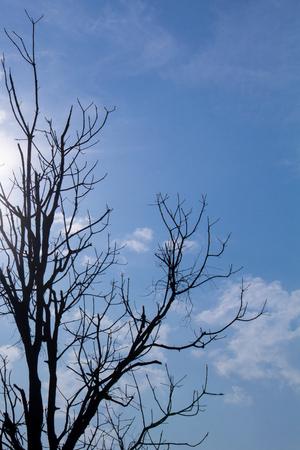 arboles secos: Árboles muertos en el día de calor. Foto de archivo