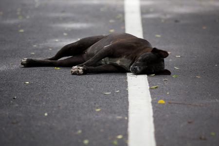 dead dog: The black dog dead on the street Stock Photo