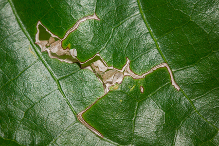 Beautiful background and detail of green leaf