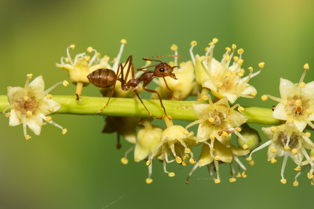 Red ant on the flowers , selective focus point Stock Photo