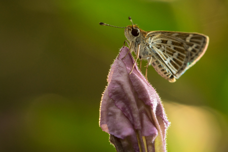 The small butterfly perched on flower in the garden. Stock Photo