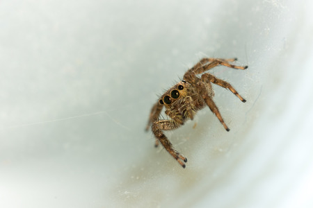 zoom: The little spider in the white background.
