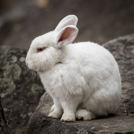 leporidae: Portrait of white rabbit in the park.