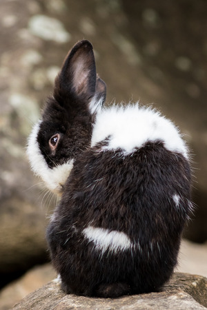 leporidae: Portrait of small rabbit in the park. Stock Photo
