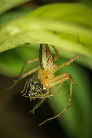 fight hunger: The little spider live in the garden.