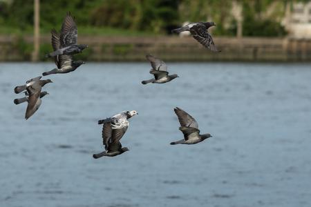 palomas volando: Las palomas que vuelan en la ciudad.