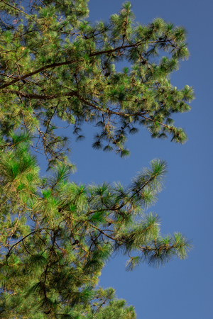 Green leaves with blue sky in the park.