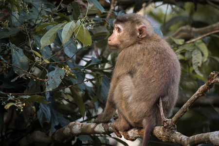 The monkey live in the forest, Khao Yai National Park, Thailand