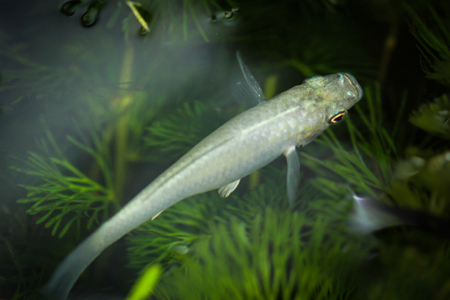 Image of a beautiful little fish in an aquarium.