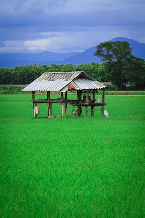 rains: Small shed at the green field surrounded by mountains.