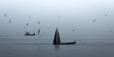 A whale live in the Gulf of Thailand.