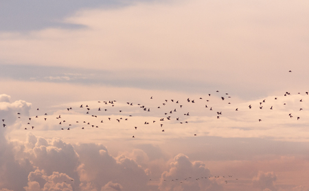 Crowd of birds in colorful cloud sky