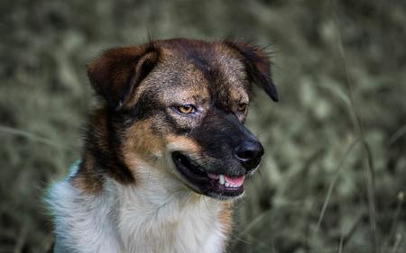 Stray dog living in the park, Bangkok, Thailand. Zdjęcie Seryjne