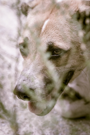 A stray dog living in the park. Selective focus on eye dog