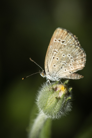 The small butterfly in the garden.