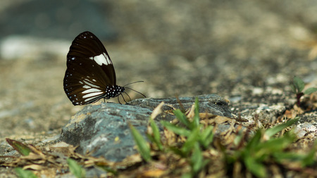 Small butterfly perched on pebbles on the ground. Zdjęcie Seryjne