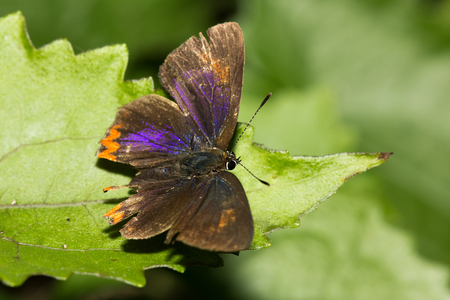 The butterfly perched on green leaf in the garden. Zdjęcie Seryjne