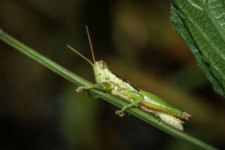 Close up of  a little grasshopper on tree in the garden.