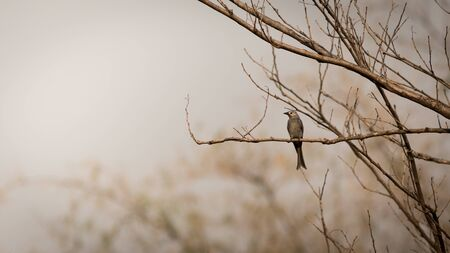 A bird perched on dry branches on summer.