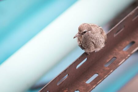 A bird on the steel bar in the urban.