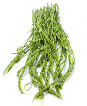 cha om: Green Cha Vegetable Isolated with white background