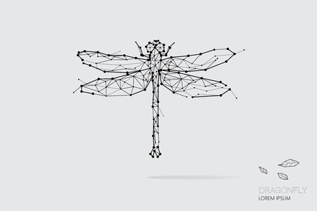 The particles, geometric art, line and dot of dragonfly. abstract vector illustration. graphic design concept of nature. - line stroke weight editable