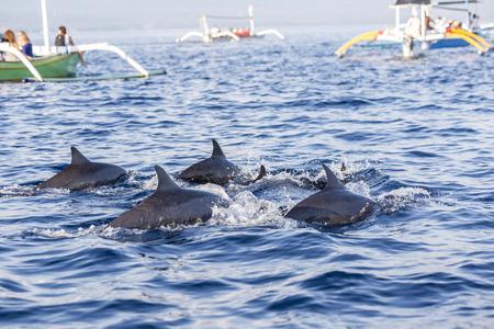 Lovina-strand, Bali, bekend als dolfijnstrand aangezien het natuurlijk met behulp van boot kan worden gezien.