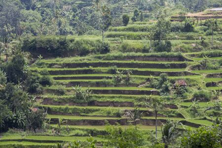 rice terraces at jati luwih village in bali, indonesia Stock Photo