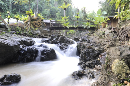 Natural beauty of rain forest in Bali,