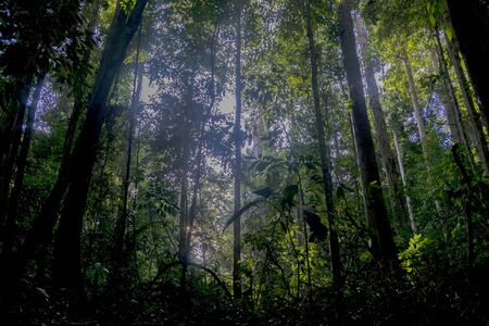 Green view of nature in deep rain forest.