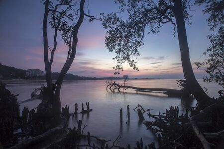 dramatically: Amazing Sunrise over dead tree at coastal beach. Stock Photo