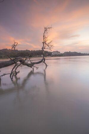 Amazing Sunrise over dead tree at coastal beach. Stock Photo