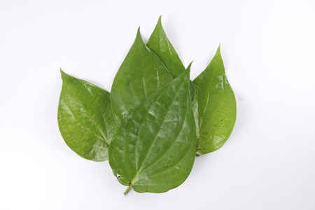 sell: Betel leaf of Indian subcontinent