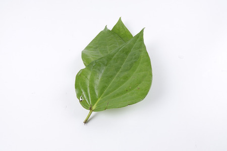 hydroxide: Betel leaf of Indian subcontinent