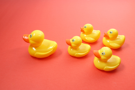 A group of ducks follwing big duck. Leadership conceptual. Stock Photo