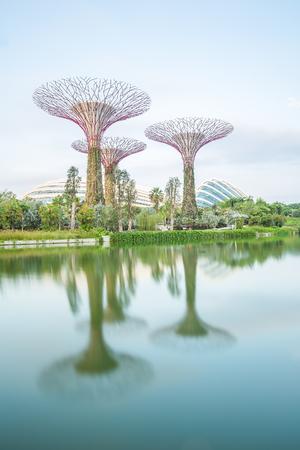 シンガポール、2015年8月27日。湾の庭で素晴らしいイルミネーションの未来的な景色。スーパーツリーグローブスでのナイトライトショーは、メイン 報道画像
