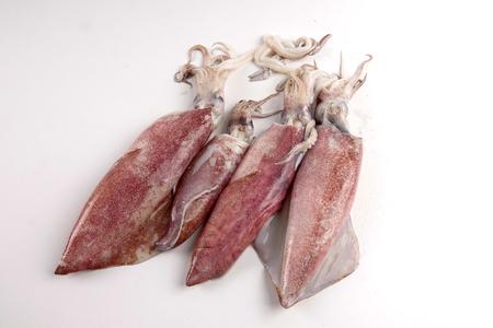 Fresh squid isolated on white background.