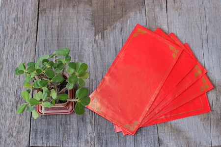 Top view of red envelope packet or ang paw and Euphorbia milli on old wooden background. Chinese new year festival concept