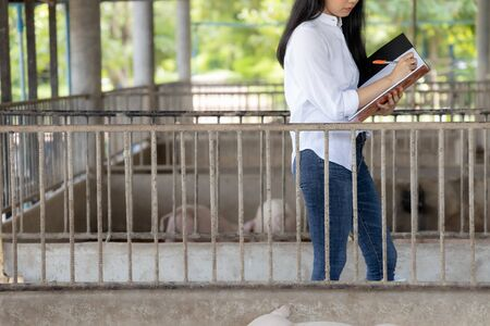 Smart farmer writing notes and checking quality in organic farm pig. Agriculture and livestock industry