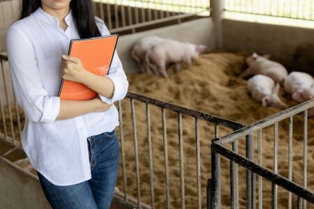 Smart farmer with notes for checking quality in hands in organic farm pig. Agriculture and livestock industry