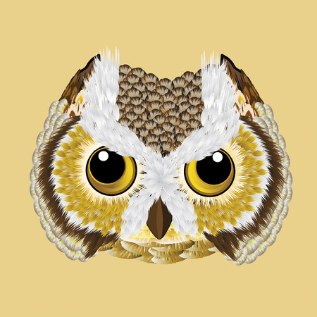 owl illustration: Owl, owl vector illustration