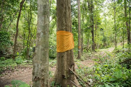 ordination: Conservation tree by tree ordination.