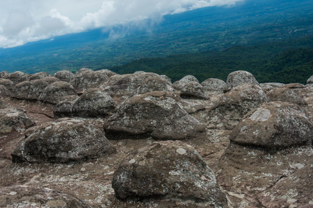 occurs: rocky button bedrock occurs naturally in Phu hin rong kra  national park,Phitsanulok province,Thailand