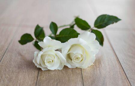 bianco Rose